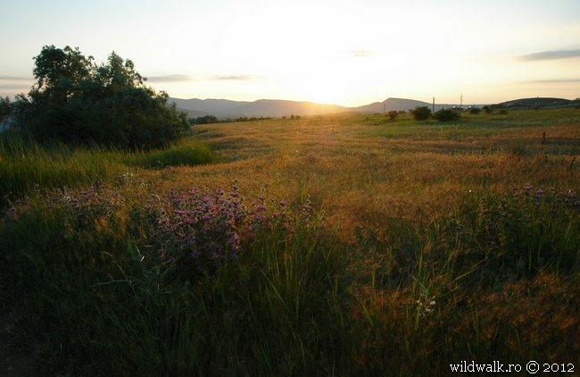 2012-06-03_19-53_DSC_6027.jpg