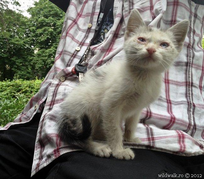 2012-27-05_09-50-pisica-explodata.jpg