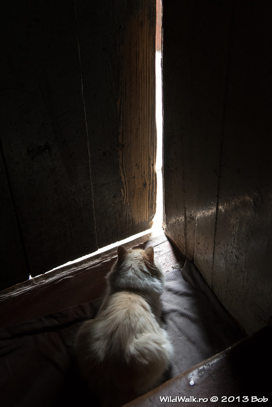 Nina's cat, Irkutsk, Russia